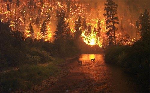 external image incendio-forestal.jpg